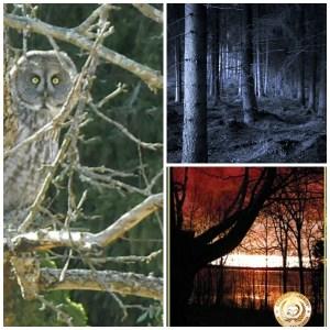 owl woods coveer