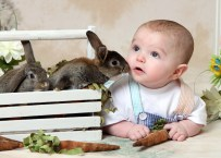 baby bunnies mini sessions