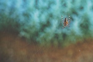 Spider on web, call Lind Pest Control in Tacoma