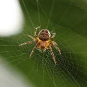 Brown Spider, Tacoma-based and family-owned pest control and inspection company