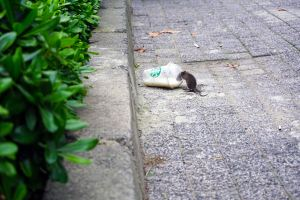 Rodent, Tacoma-based and family-owned pest control and inspection company