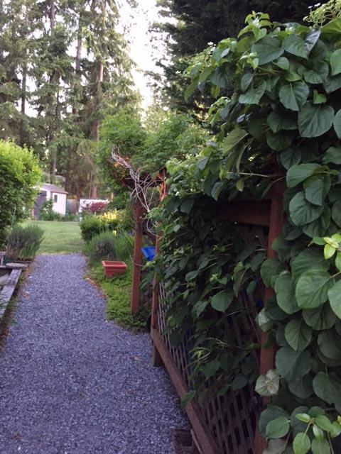 Lind landscaping