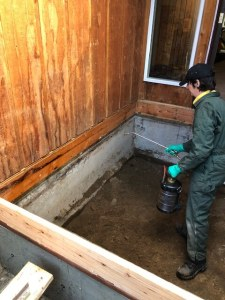 Treating the rim joist with a borate
