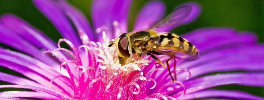 Bee on flower: April showers not only bring May flowers, they bring bugs! We offer a few tips on what to look for to stay bug free this spring.