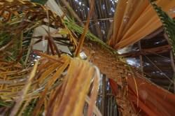 Max McCann's woven palm chandelier.