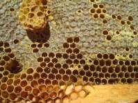 Fresh honeycomb