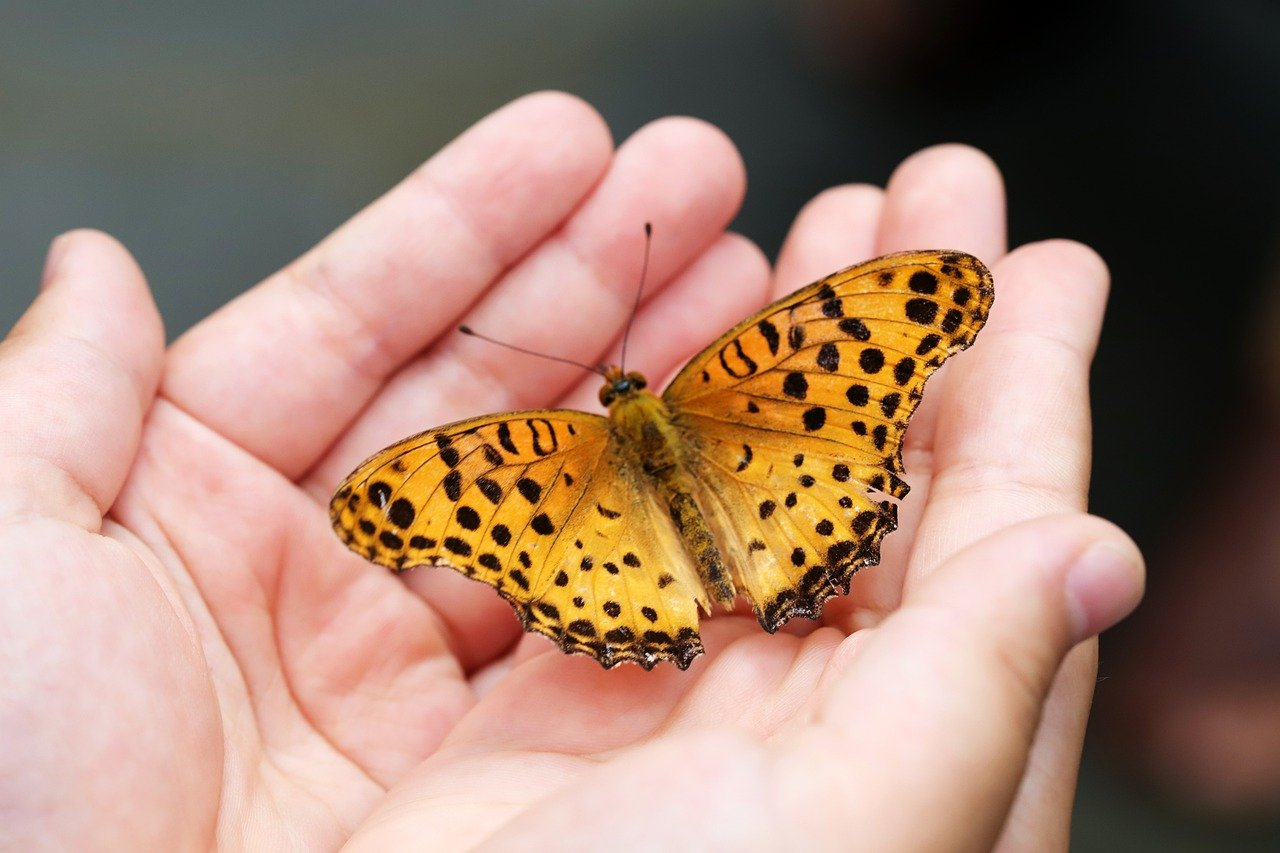 butterfly, insects, hand-4396444.jpg