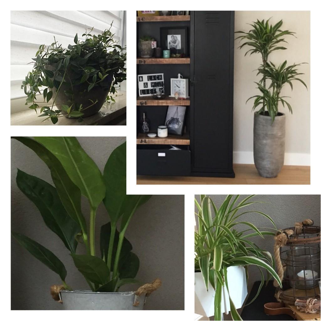 Een jungle in de woonkamer