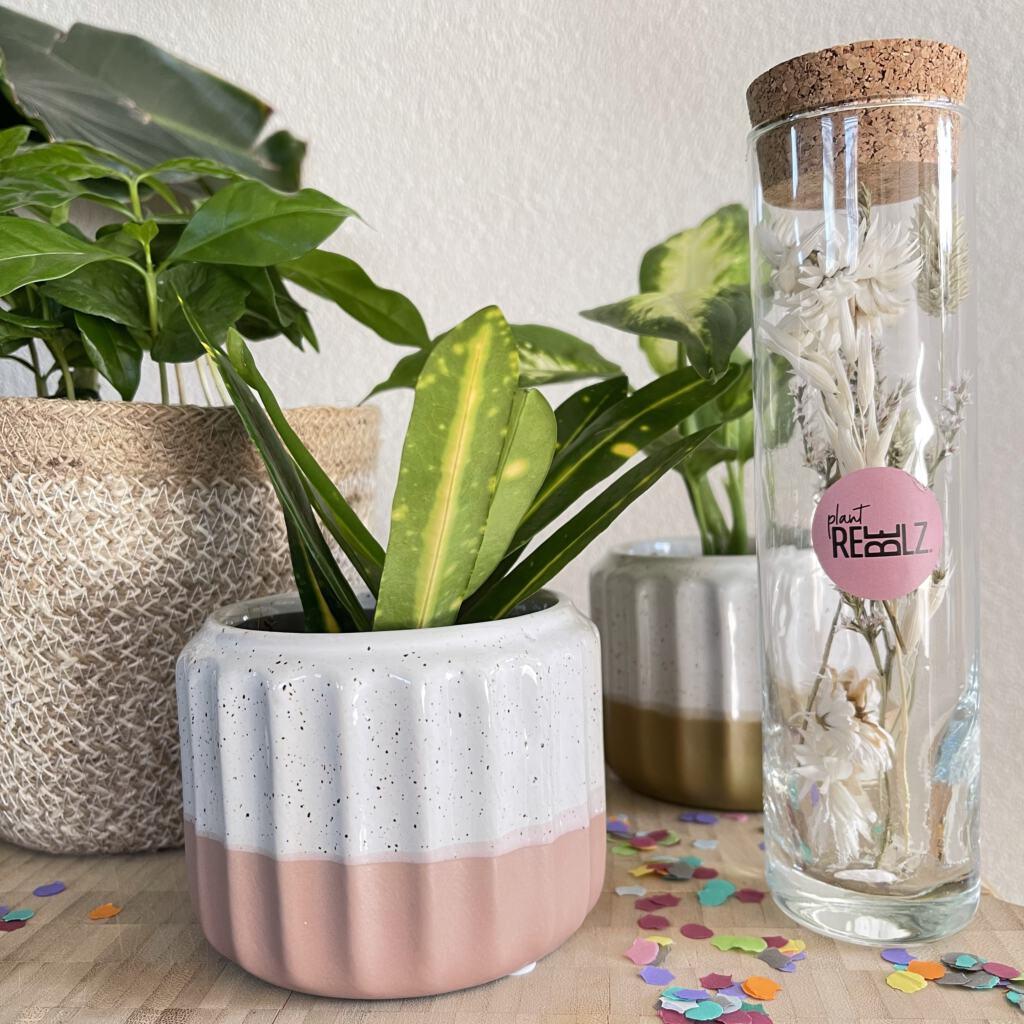 Hippe en makkelijke kamerplanten