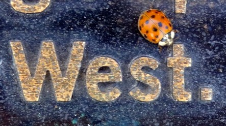 West Lady Bug