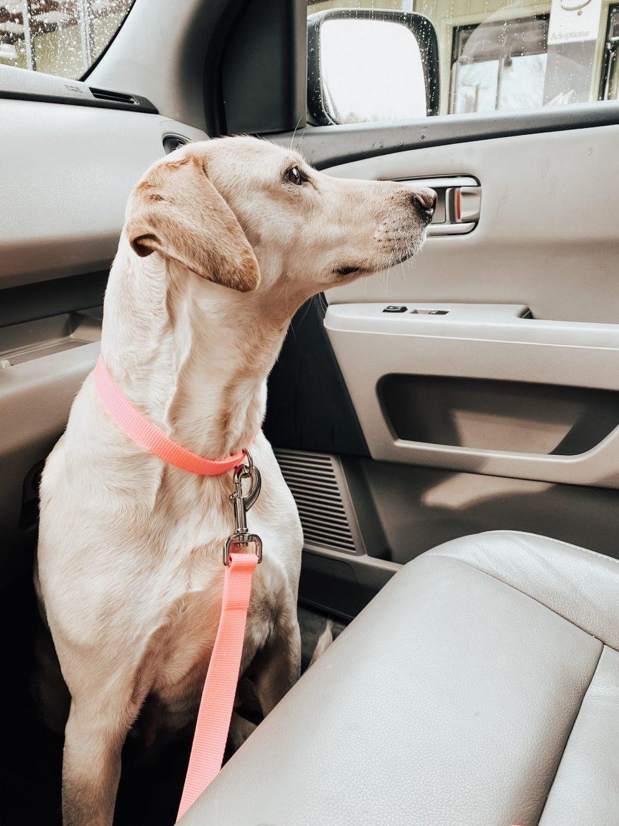 We got a dog!