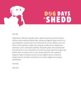 DDS_letterhead_612x792