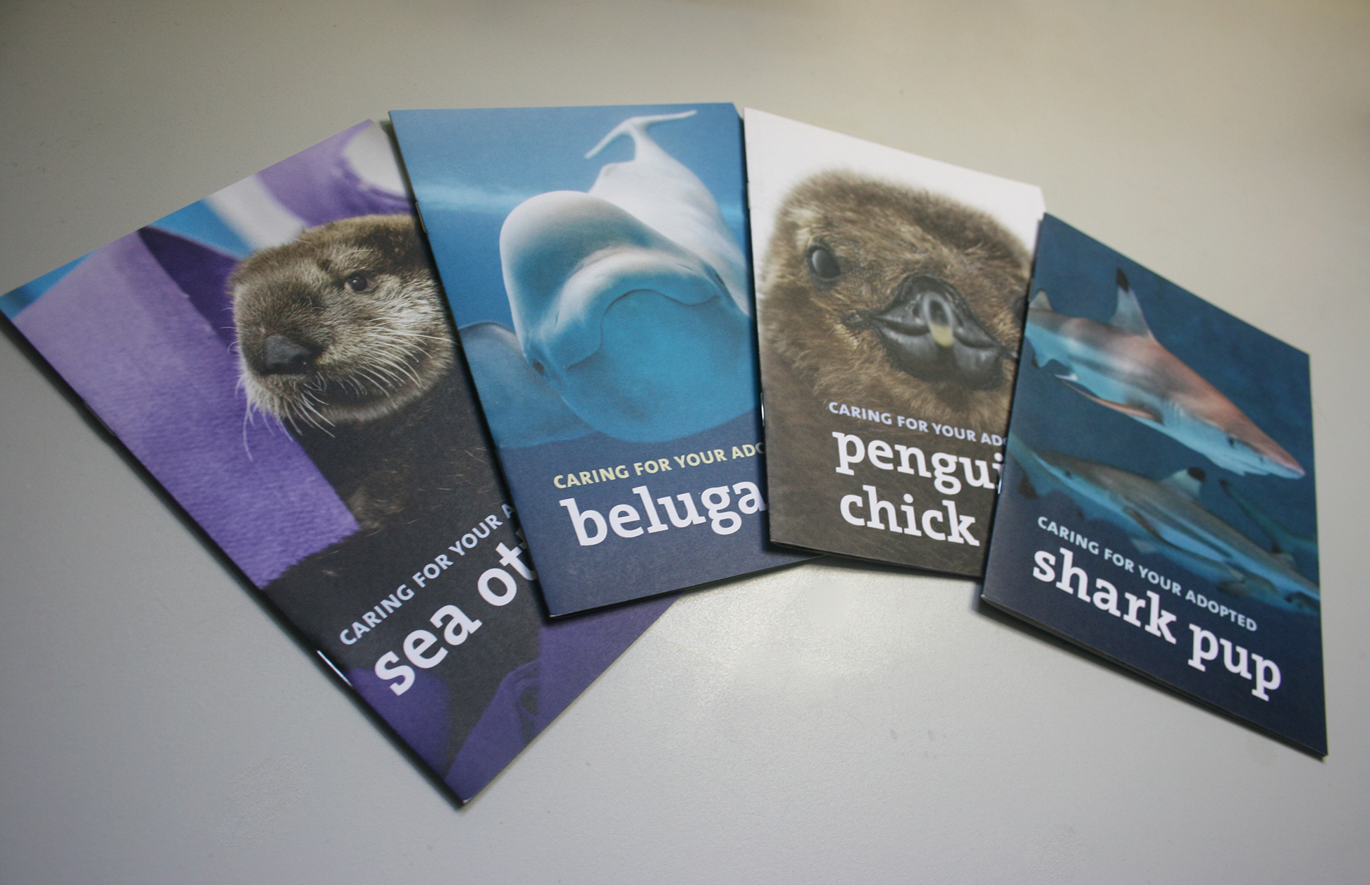 A set of four booklets are shown, each featuring a large photo of an animal with the title, 'Caring for your adopted...' and the name of the animal. The animals shown are a sea otter, a beluga whale, a penguin chick, and a shark pup.