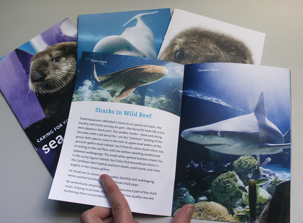 A booklet is shown opened to an informational spread about sharks. On the left page is information about the sharks in Shedd's Wild Reef habitat. On the right page is a photo of a sandbar shark.