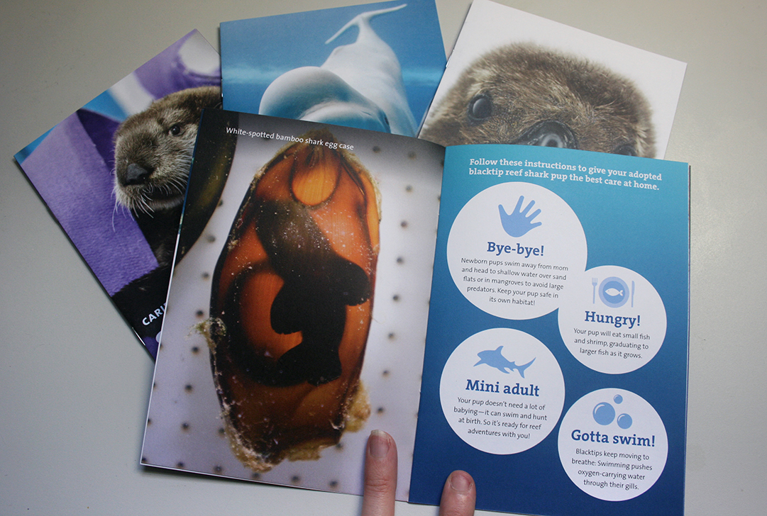 A booklet is shown opened to a two-page spread about shark pups. On the left page, a tiny baby shark can be seen inside of a brown, leathery shark egg when a light is shined on it. On the right page are four white circles over a teal-and-blue background gradient, each circle featuring a fact about shark pups.