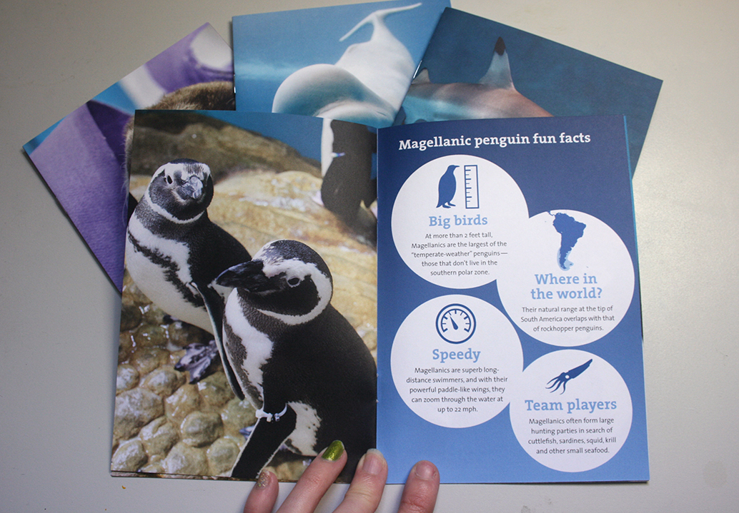 A booklet is shown opened to a spread about magellanic penguins. On the left page is a photo of two magellanic penguins in Shedd's penguin habitat. On the right page four Magellanic penguin facts are shown with playful icons on four white circles over a blue gradient background.
