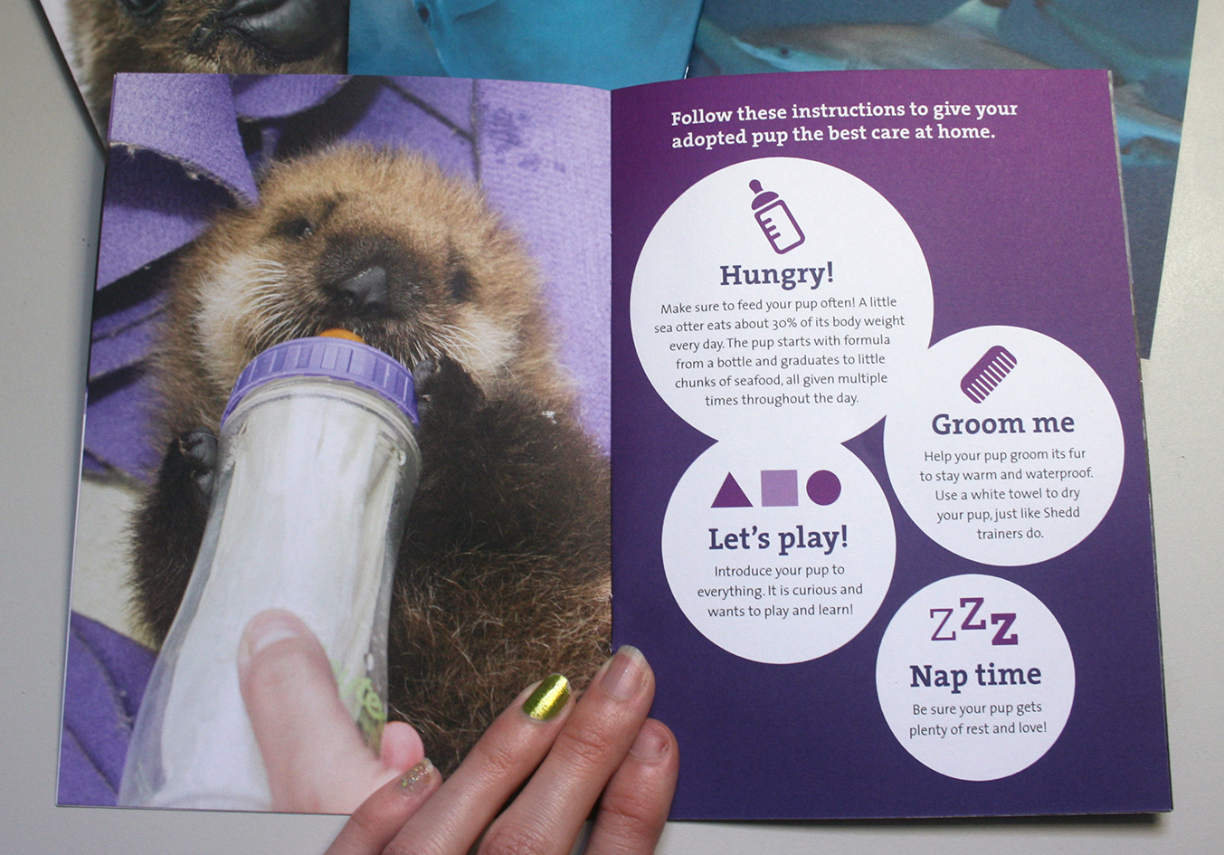 A booklet is shown opened to an informational spread. On the left page is a photo of an otter pup being fed from a bottle. On the right page various tips for taking care of an otter pup are shown in white bubbles along with playful icons. The white bubbles sit on a purple gradiented background.