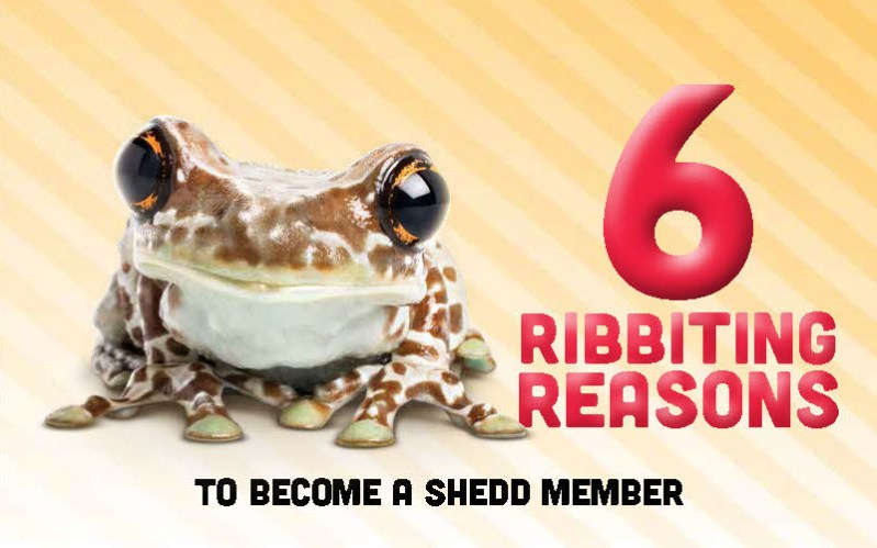 The front of a self-mailer reading '6 ribbiting reasons to become a shedd member' in dramatic red text that appears to raise off of the page. A large photo of a brown frog with enormous shiny eyes stares at the viewer.