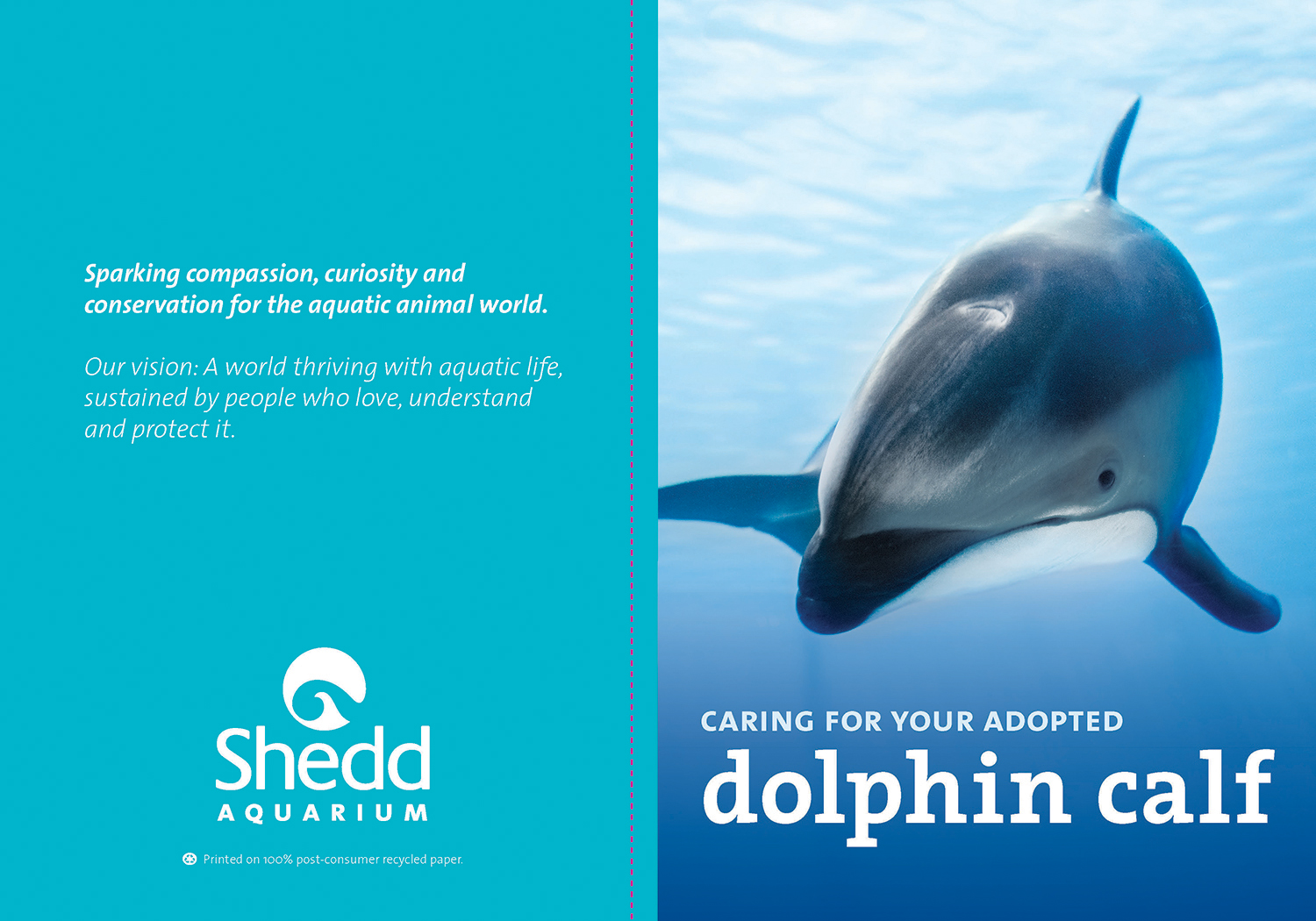 The cover spread for an adopt booklet. A photo of a dolphin fills the cover, with the text 'Caring for your adopted dolphin calf' overlaid. On the back fo the booklet is Shedd's mission statement and logo over a teal background.