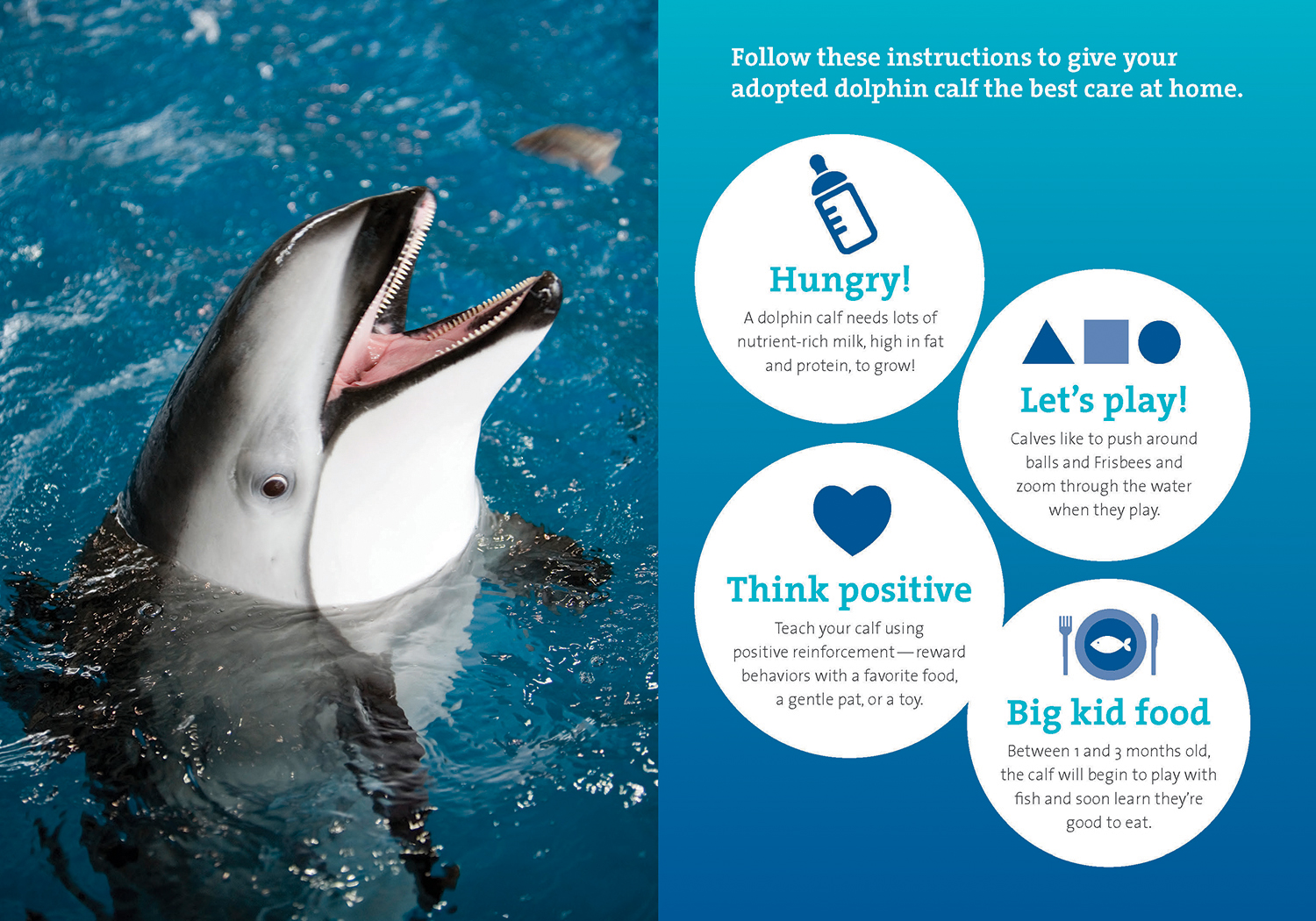 A two-page spread featuring a dolphin on the left, and on the right are various white circles over a blue-and-teal gradient, each with dolphin calf fun facts and a catchy headline and icon. The facts are preceded by a title reading 'Follow the instructions to give your adopted dolphin calf the best home.'