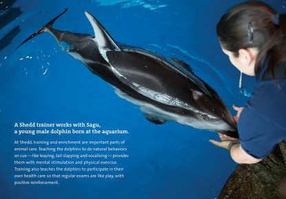 MKT1721_Adopt_Kit_booklet_Dolphin_Final__Page_4_RGB
