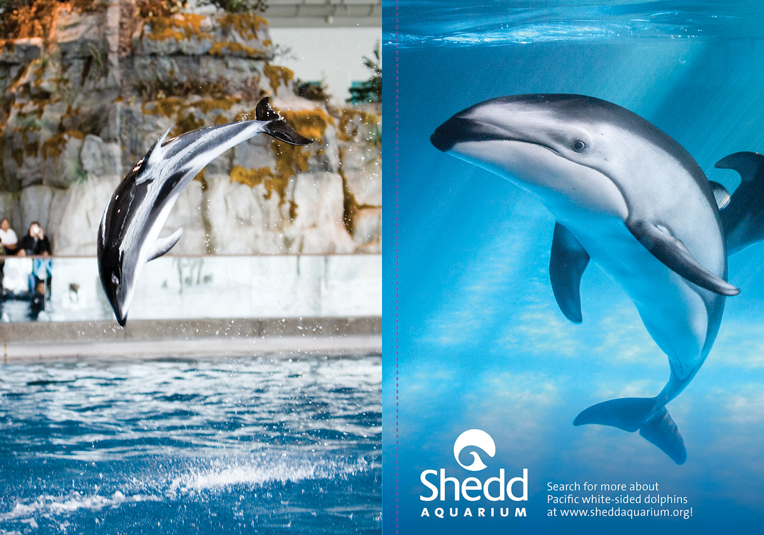 A two page spread featuring a photo of dolphins jumping to the left, and a dolphin peering at the camera underwater on the right.