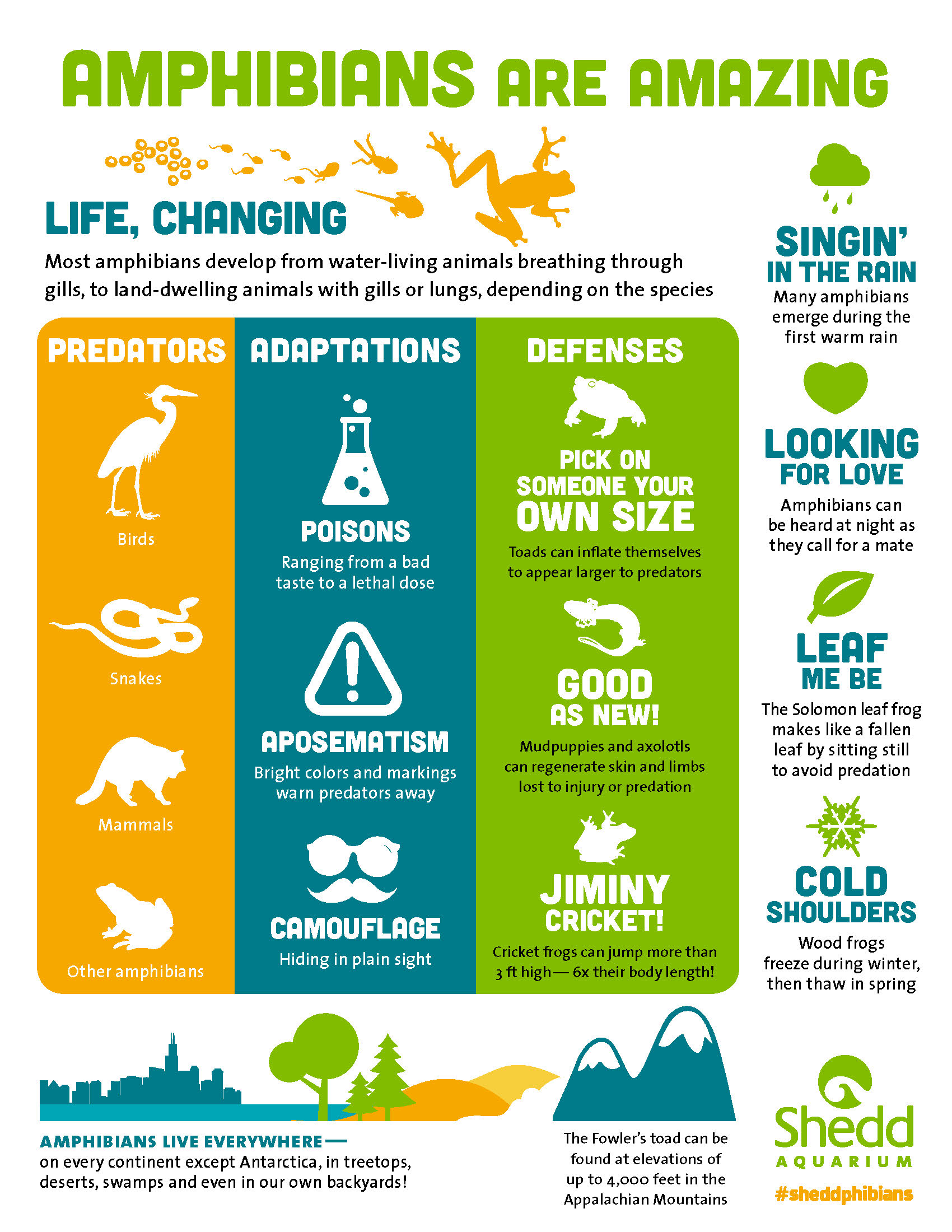 """A colorful infographic with the title 'Ambibians are amazing: Life, changing"""" at the top, and various facts accompanied by playful icons filling up the page."""