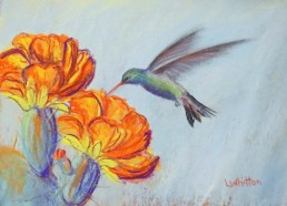 Hummingbird and Cactus (pastel) 23x31cm $80