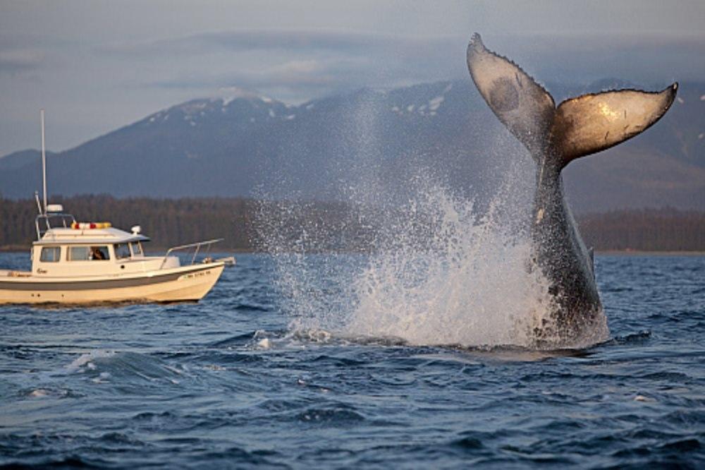avistamiento ballenas pacifico colombia ecoturismo