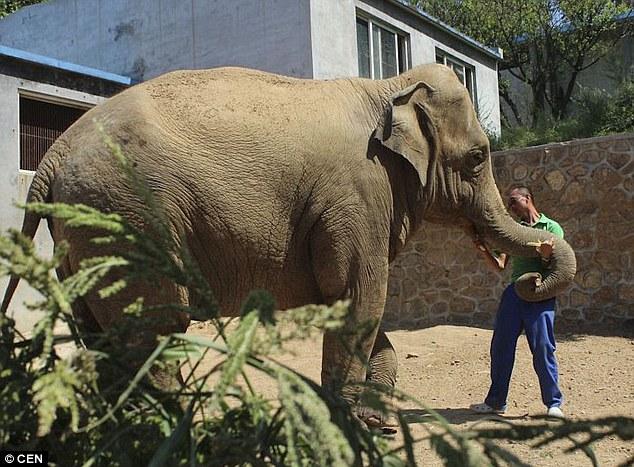 elefantas1