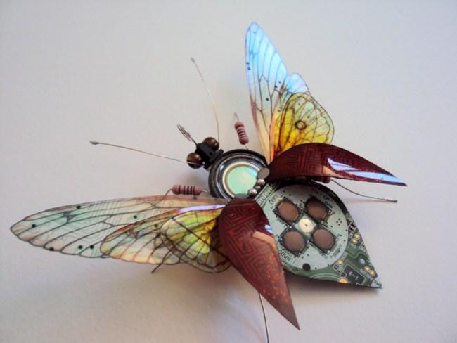 entomo10