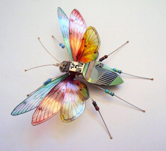 entomo4