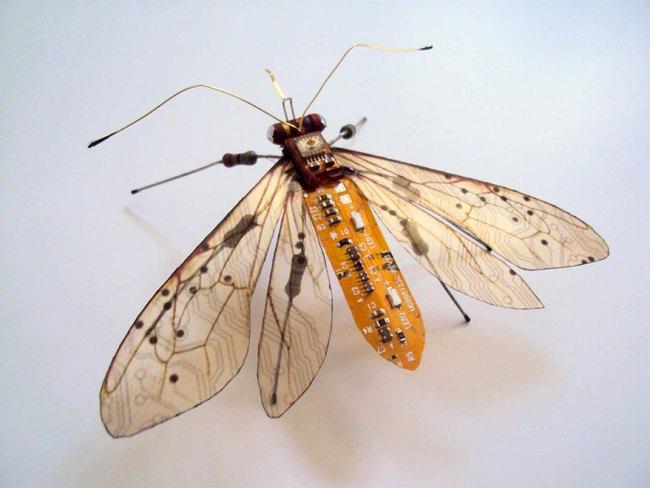 entomo5
