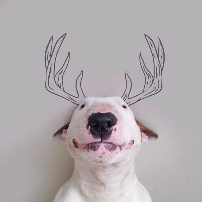 Bull-Terrier5