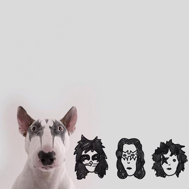 -Bull-Terrier9