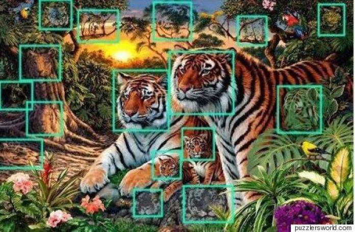 lysh tiger