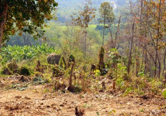 My day at Chiang Mai's Elephant Retirement Park