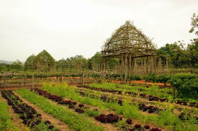 The gardens of Babylonstoren