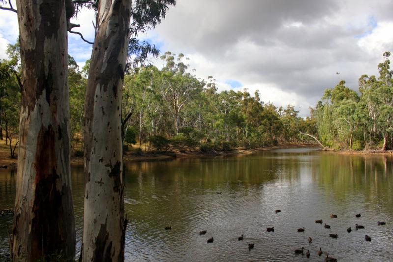 Lake in Belair National Park