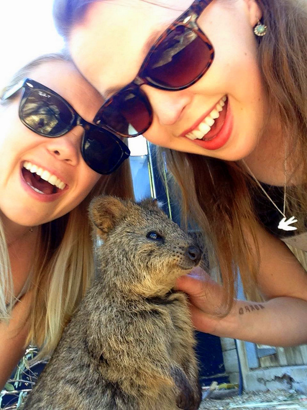 Quokkas in Adelaide