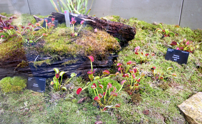 Carnivorous plants at Kew Gardens
