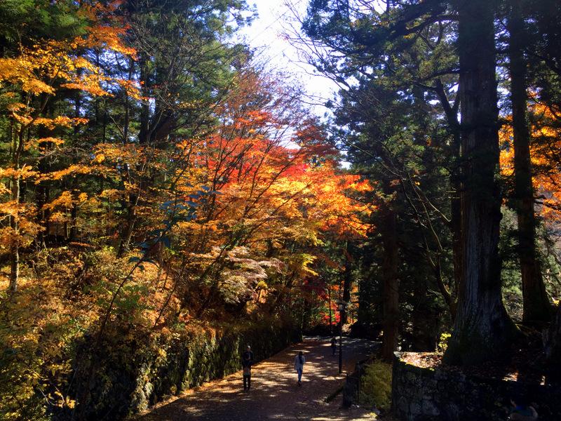 Nikko in the Autumn