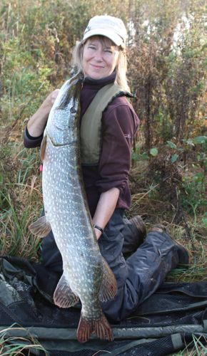 13.Time to talk fishing, but not much, if any, time to fish this season - but Dilip's wife, Angling Trust Key Volunteer Karen, had a rake of doubles from the Wye at the beginning of November, topped by this lovely 19.04 – as usual our man was there just to make up the numbers!