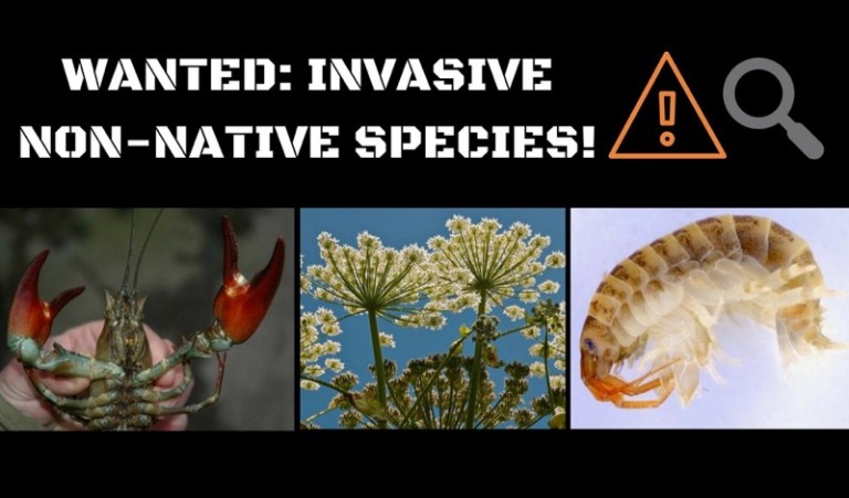 Invasive_Species_Angling_Trust_penny - 1 (1)