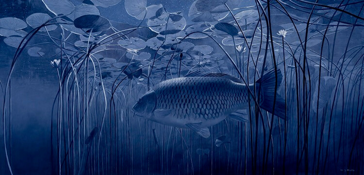 Night carp David Miller art