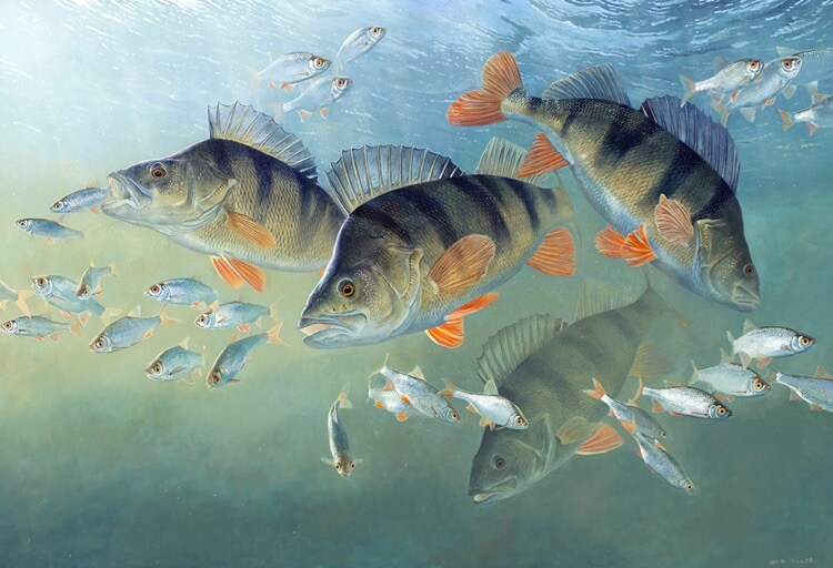 David Miller fish art perch