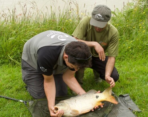 Carp care tips essentials