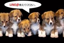 LINE@教えてください