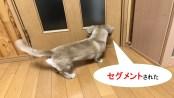 セグメントされた犬