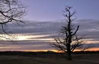 Bg Meadows Sunrise(w)# (2)